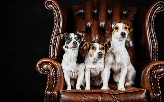 Papéis de Parede Três cães sentam-se na cadeira