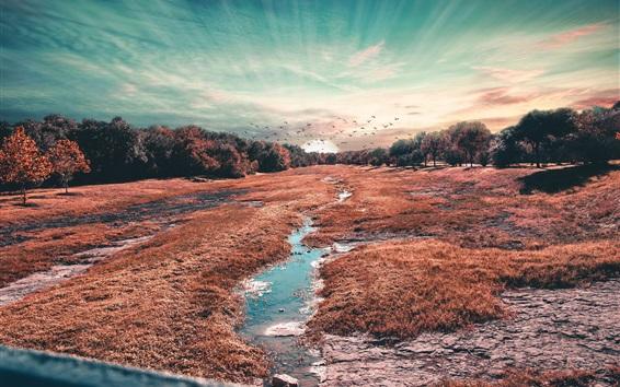Wallpaper Trees, fields, birds, sunset