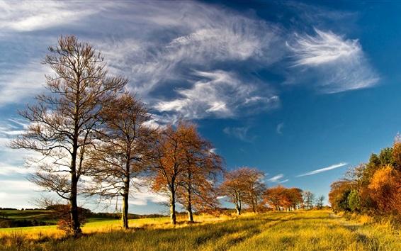 Wallpaper Trees, grass, autumn, sky, clouds