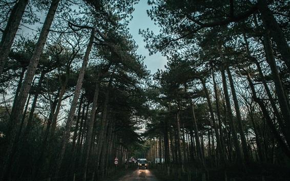 Fondos de pantalla Árboles, camino, coches, anochecer