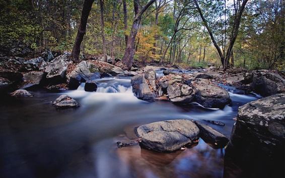 Обои Деревья, камни, ручей, вода