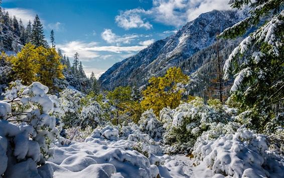 Обои Тринити-Альпы, снег, горы, деревья, Калифорния, США