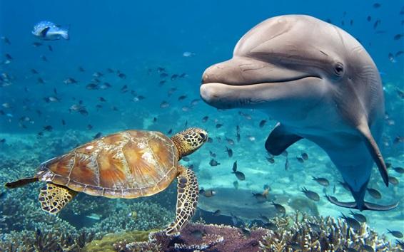 Fondos de pantalla Tortuga y delfín, mar