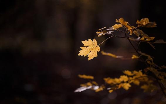 Wallpaper Twigs, yellow leaves, dark background