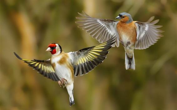 Papéis de Parede Dois pássaros voando, passarinhos, asas