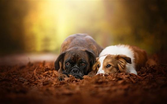 Wallpaper Two dogs rest, friends