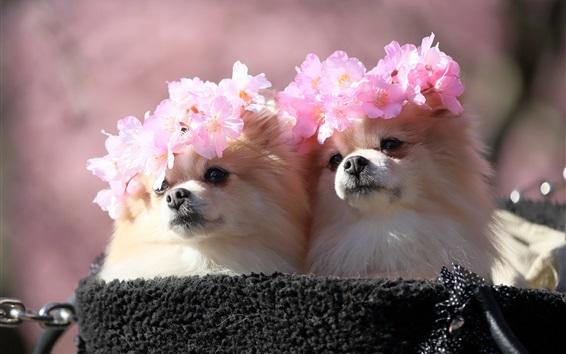 Papéis de Parede Dois cães, grinalda de sakura