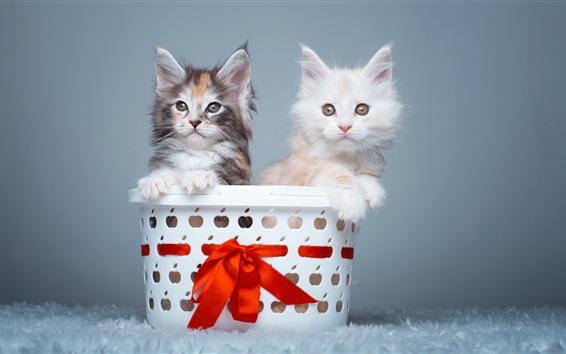 Fondos de pantalla Dos gatitos, lindas mascotas