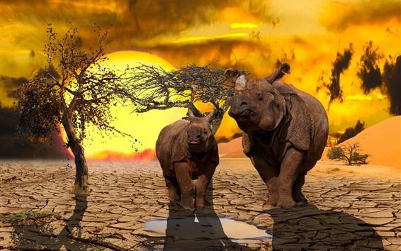Papéis de Parede Dois rinocerontes, terra seca, árvore, pôr-do-sol