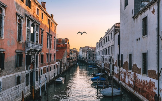 Wallpaper Venice, Italy, canal, houses, flying bird