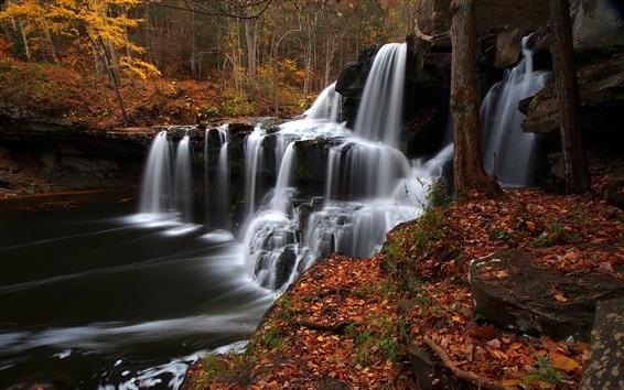 Wallpaper West Virginia, trees, stream, waterfall, autumn, USA