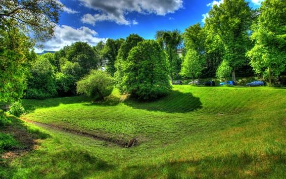 배경 화면 베츨 라르, 독일, 나무, 잔디, 초록