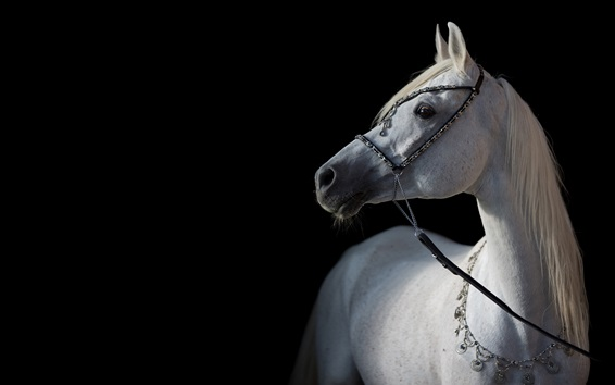 Wallpaper White Horse Black Background 3840x2160 Uhd 4k