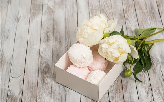 Fondos de pantalla Peonías blancas, flores