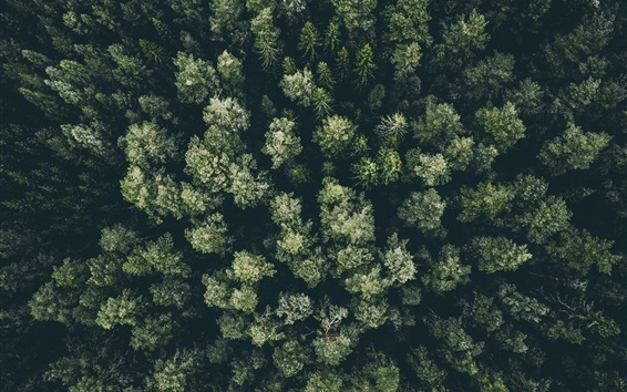Wallpaper Winter, forest, trees, snow, top view