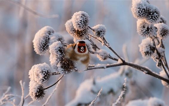 Papéis de Parede Inverno, neve, galhos, pássaro