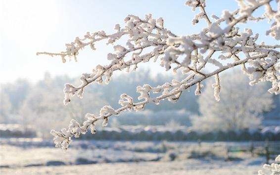 Papéis de Parede Inverno, galhos, neve