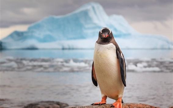 Wallpaper Antarctica, penguin, iceberg