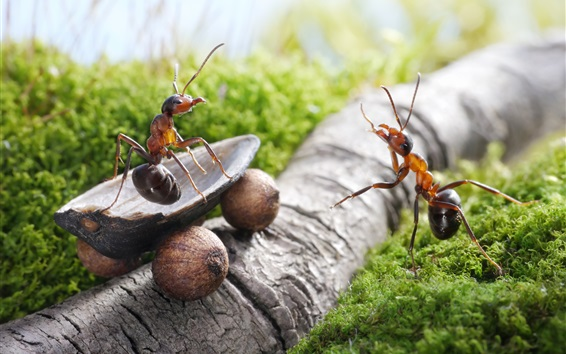 Wallpaper Ants, nuts, truck, creative