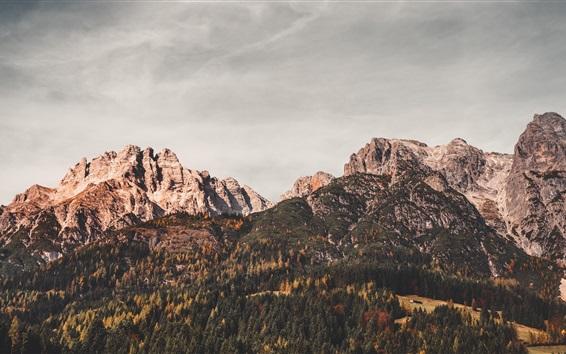 Wallpaper Austria, Leogang, mountains, trees