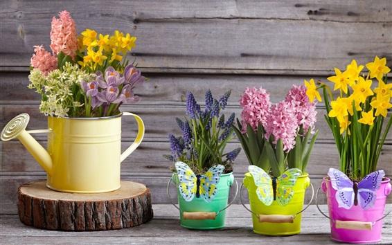 Fond d'écran Belles fleurs, jacinthes, jonquilles, crocus