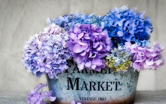 Wallpaper Beautiful hydrangea, colorful flowers, inflorescence