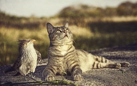 Papéis de Parede Bird e gato olham para cima