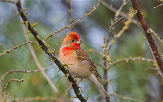 Papéis de Parede Bird olha para trás, ramos