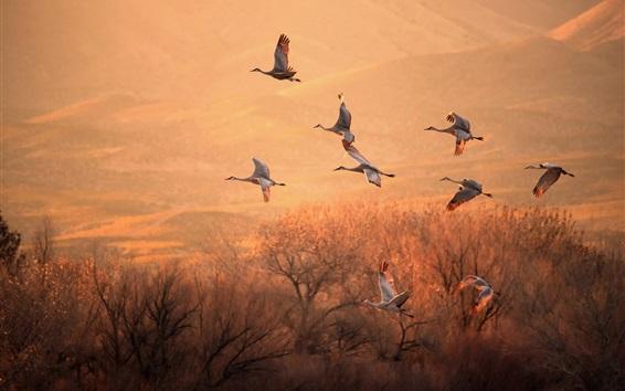 Wallpaper Birds flight, morning