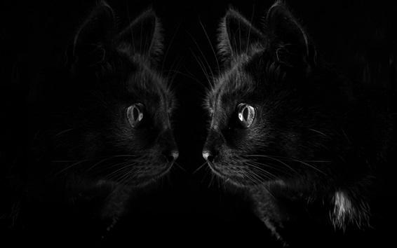 Fond d'écran Chat noir regarder miroir, fond noir