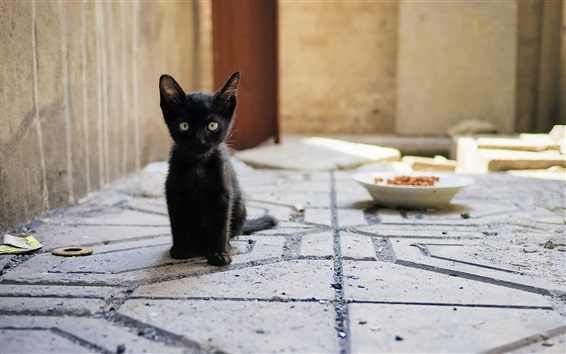 Wallpaper Black kitten sit down, look, ground