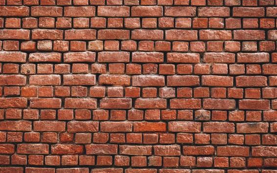 Papéis de Parede Fundo da parede de tijolos, textura