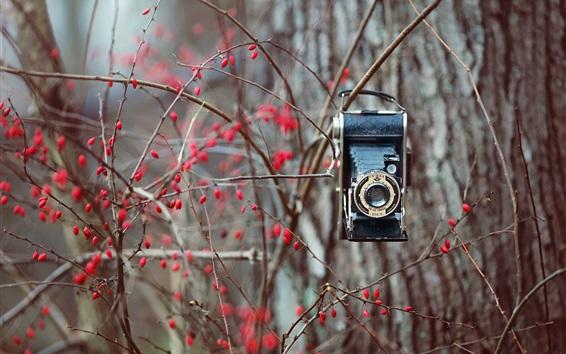 Wallpaper Bushes, red berries, camera