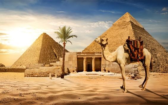Обои Каир, пирамида, верблюд, пески, пальма, солнце, Египет