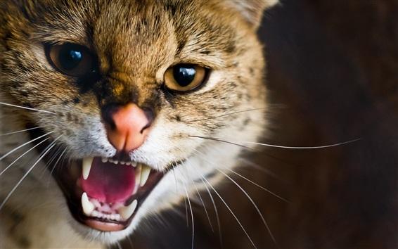 Обои Кошка сердится