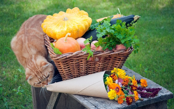 Wallpaper Cat, vegetables, flowers, basket