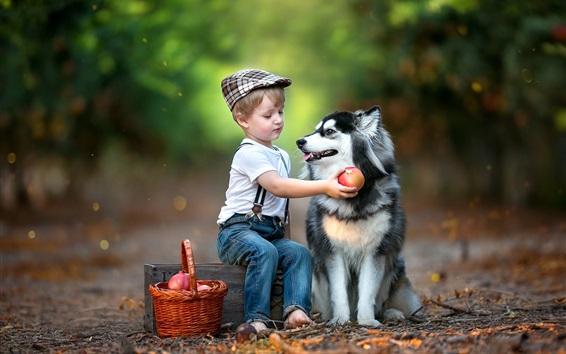 Fond d'écran Enfant garçon et chien husky