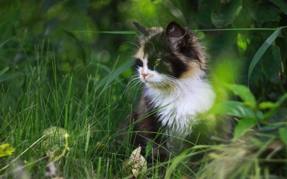 Wallpaper Cute cat in the grass, furry pet