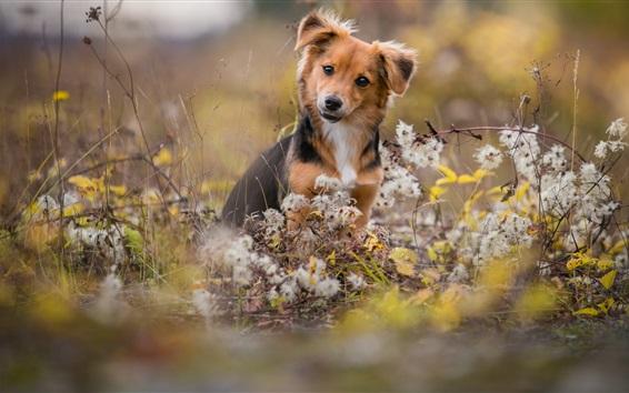 배경 화면 귀여운 개, 야생화