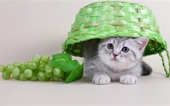 Papéis de Parede Cute gatinho, cesta, uva, animais engraçados