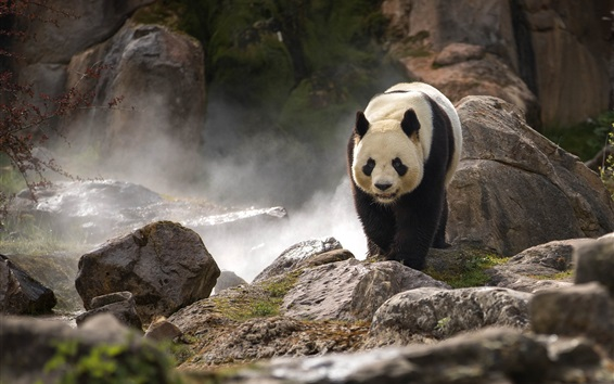 Papéis de Parede Caminhada panda linda, pedras