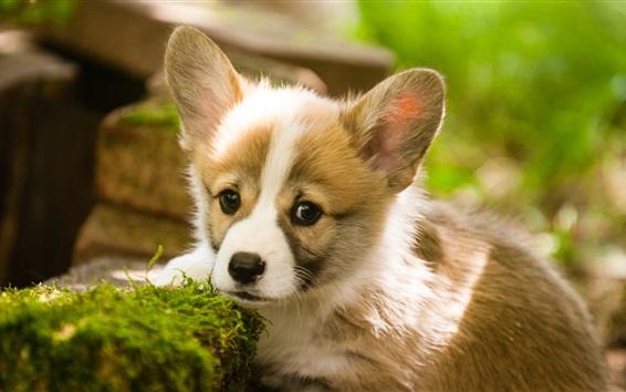 Papéis de Parede Filhote de cachorro bonito, musgo