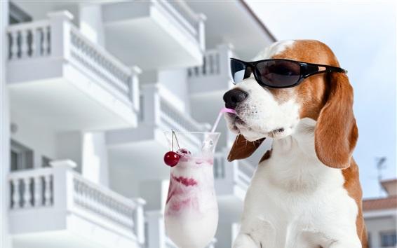 Wallpaper Dog eat ice cream, sunglasses, funny animals
