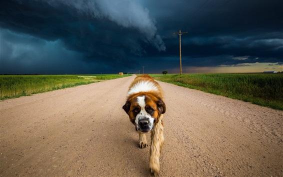 Fond d'écran Chien marche dans la route, nuages, tempête
