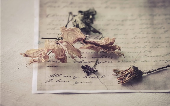 Wallpaper Dried flowers, letter