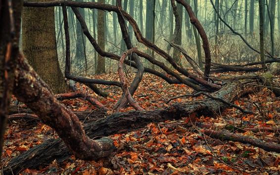 Обои Лес, сухие деревья, листва, осень