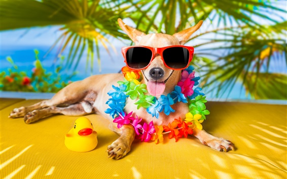 Papéis de Parede Cães engraçados, óculos de sol, flores, pato de brinquedo, humor