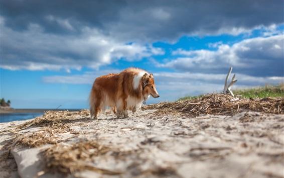 Papéis de Parede Cão peludo, nuvens, céu