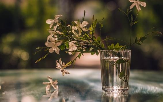 배경 화면 유리 컵, 꽃, 반사