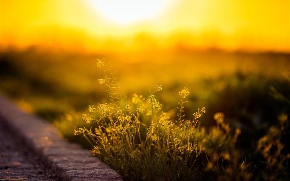 Wallpaper Grass, sunlight, morning
